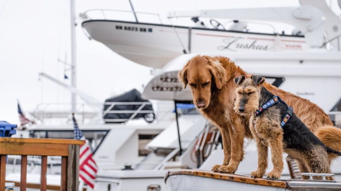 two dogs in live vests on board of a boat, Ten Tips for Boating With Your Pets Before Going On Board