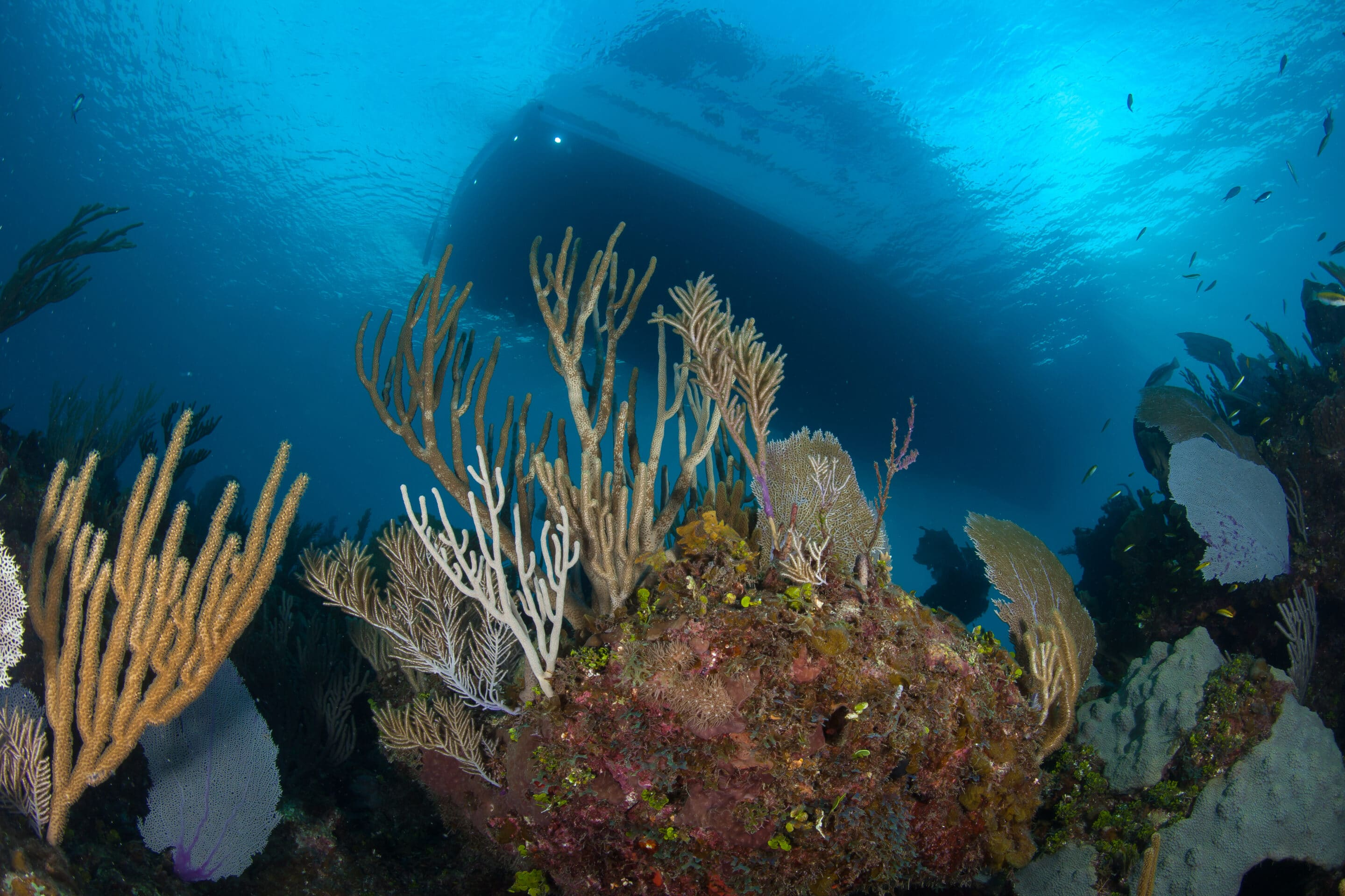 RV ANGARI from below Coral Reef scaled